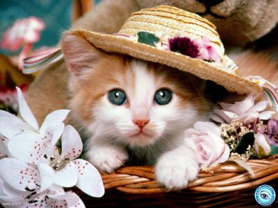 گربه آموزش دیده و زیبا